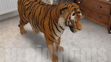 Hewan 3D